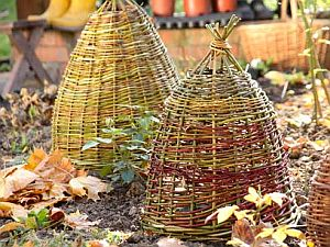 Sodo augalų paruošimas žiemai
